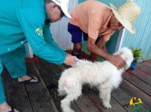 Prefeitura de Anamã realiza vacinação de cães e gatos no município