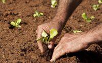 Projeto de Fortalecimento da Agricultura Familiar na Amazônia Legal beneficiou sete mil produtores