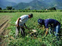 Declaração do Imposto sobre Propriedade Territorial Rural deve ser preenchida entre 17 de agosto e 30 de setembro