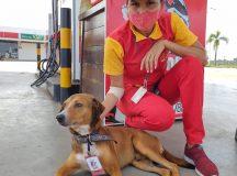 Cachorro é adotado por funcionários de posto Atem do município de Iranduba e ganha crachá de funcionário